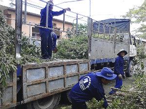Chăm sóc và chặt tỉa cây xanh